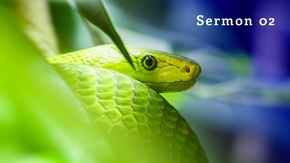 Poster for The Serpent in Our Garden