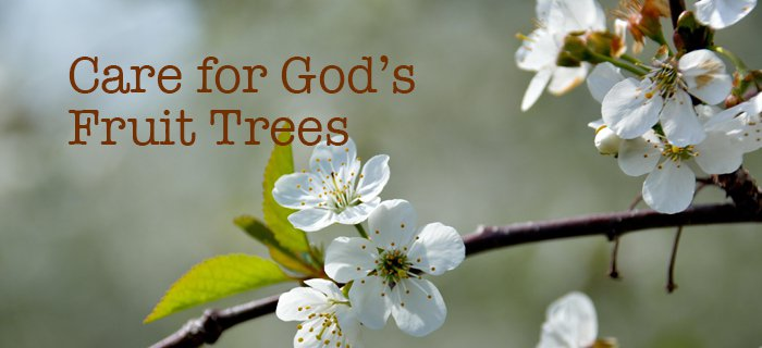 Care For God's Fruit Trees poster