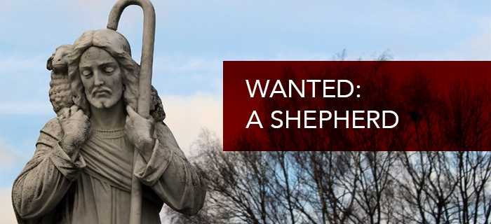 Wanted: A Shepherd poster