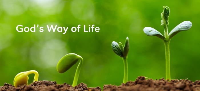 God's Way Of Life poster